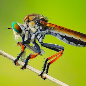 Desert by Setiady Wijaya - Animals Insects & Spiders