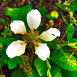 wild white flower by Audra