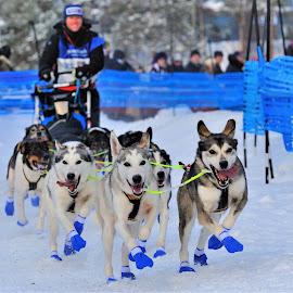 Race by Tomasz Budziak - Sports & Fitness Snow Sports ( sports, snow, winter )
