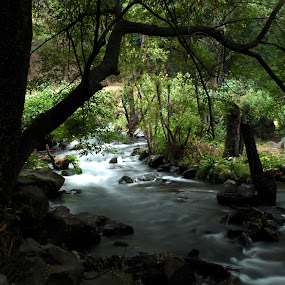 river by Cristobal Garciaferro Rubio - Nature Up Close Trees & Bushes ( water, popocatepetl, trees, rocks, branches, river )