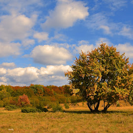Getting older by Janez Šturm - Nature Up Close Trees & Bushes ( clouds, sky, tree, autumn, bushes )