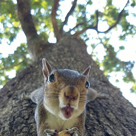 Rosie by Hope Crocker - Animals Other ( funny animals, cute squirrel, wildlife, animals making funny faces, squirrel )