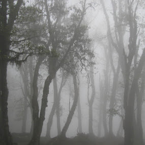Fog by Shishir Desai - Landscapes Weather ( pwcfoulweather, path, nature, landscape )