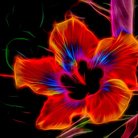 Tinkerbell's Hibiscus by Dave Walters - Digital Art Things ( nature, abstract, lumix fz2500, colors, digital art,  )