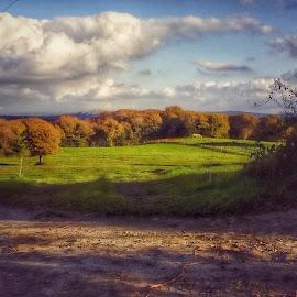 West Cork by Nikki Kitley - Landscapes Prairies, Meadows & Fields ( cork, ireland, seasons, autumn, brown, rust, landscape )
