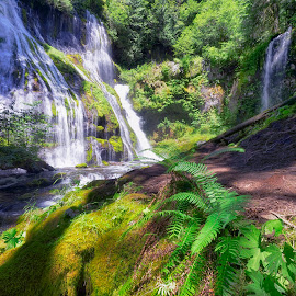Panther Creek Falls by Michael Otter - Landscapes Forests