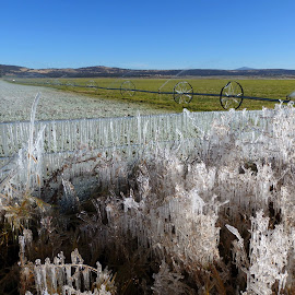 Frost on the farm by Ann Rainey - Landscapes Weather ( farm, field, cold, ice, frost, icecycles )