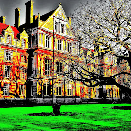 Dublin College by Nick Remick - City,  Street & Park  Historic Districts ( ireland, tree, shadow, green, dublin, college, shadows )