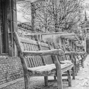 edinburgh gardens  by Danny Charge - City,  Street & Park  City Parks ( b&w, park, bench, snow, garden )