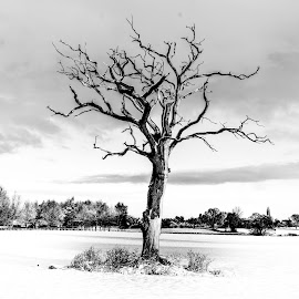 by Nigel Bishton - Black & White Landscapes
