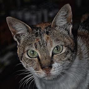 by Yosh Ginsu - Animals - Cats Portraits