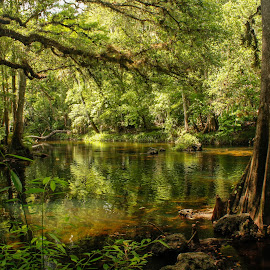 Lazy River by Bobbie Stone - Landscapes Forests ( peaceful, nature, green, florida, cypress, south, rivers, natural, hike, golden, river, relax, tranquil, relaxing, tranquility )