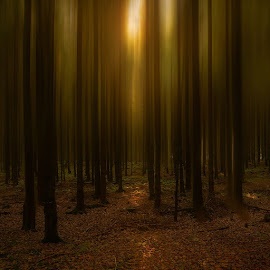 M y L i g h t by Manu Heiskanen - Uncategorized All Uncategorized ( abstract, tree, color, trees, forest, leaf, leaves, light, paulinawolekpardon, sun )