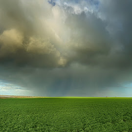 Rainbow by Susan Marshall - Landscapes Weather ( field, clouds, sky, weather, rainbow )