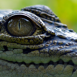#3 by Yadi Setiadi - Animals Reptiles