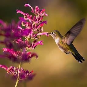by Brandon Downing - Animals Birds