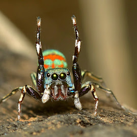 Siler by Sunny Joseph - Animals Insects & Spiders