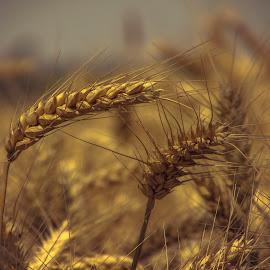 by Jasminka  Tomasevic - Landscapes Prairies, Meadows & Fields