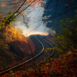 Morning on the track by Ruda Stančík - Landscapes Travel ( nature, autumn, track, forest, morning )
