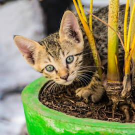 Playing with pot by Tushar Thakur - Animals - Cats Kittens ( cat, kitten, kittens )
