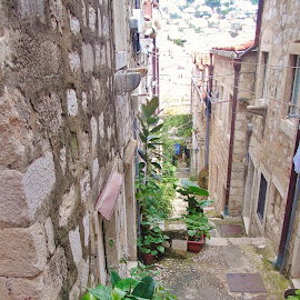 DOWNSTAIRS by Wojtylak Maria - City,  Street & Park  Street Scenes ( narrow, stairs, decoration, street, croatia, plants, town, down )