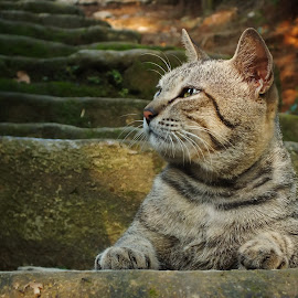 morning reverie by Insan Ginanjar Budiman - Animals - Cats Portraits ( cat )