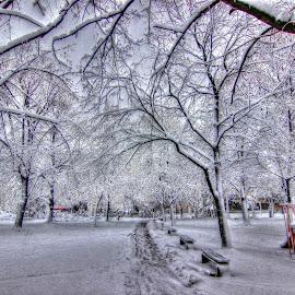 by Biljana Nikolic - City,  Street & Park  City Parks
