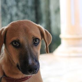 Hello by Vivek Chethan Muliya - Animals - Dogs Portraits ( animals, portraits, dog )