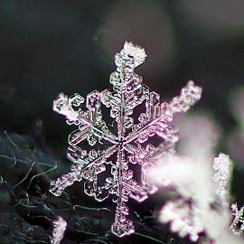 snowflake macro 2 by Kevin Adams - Nature Up Close Water