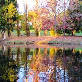 Autumn reflections by Kim Storey - City,  Street & Park  City Parks