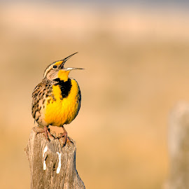 by Randall Roesner - Animals Birds