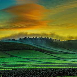 Fog fields by Pedro Vaz de Carvalho - Landscapes Prairies, Meadows & Fields