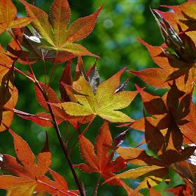 Best Dallas Botanical Gardens (4).JPG