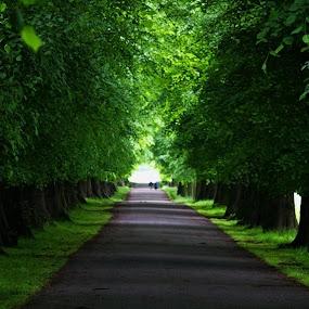 Full Of Green, Wollaton Park , Nottingham by Chetan Saini - Landscapes Forests