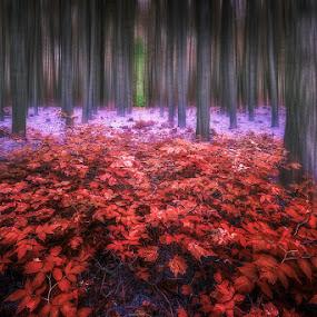 by Dragan Milovanovic - Digital Art Places