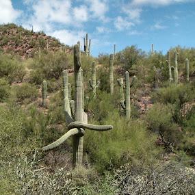 by Lynette Phipps - Landscapes Deserts