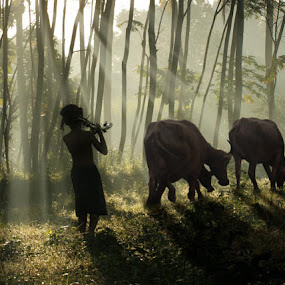 one morning by Budi Cc-line - City,  Street & Park  Vistas ( buffalo, morning, light )