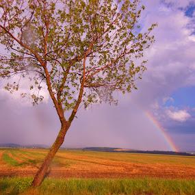 Rainbow by Libuše Kludská - Landscapes Weather