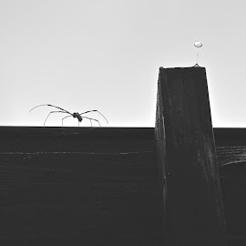 Defy Gravity by Benjamin Salazar - Black & White Animals ( water, drops, bug, spider,  )