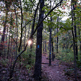 Pine Mountain 2 by Angela Hollowell - Novices Only Landscapes ( nature, autumn, state park, jiking, sunshine )