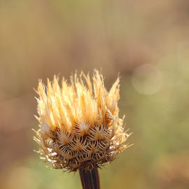 by Kathy Suttles - Nature Up Close Leaves & Grasses