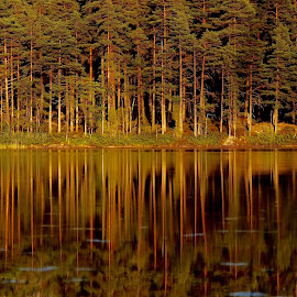 Reflections4 by Alf Winnaess - Landscapes Forests ( #mirror#nature#light )