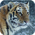 Wild Hunter 2016 ™ : Ice Age APK baixar