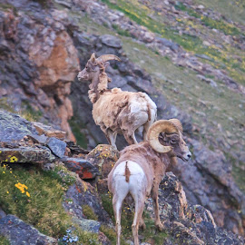 Living On The Edge by Kathy Suttles - Animals Other Mammals