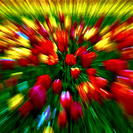 Tulip tornado by Jim Jones - Abstract Patterns ( art, color, patterns, design, abstract )
