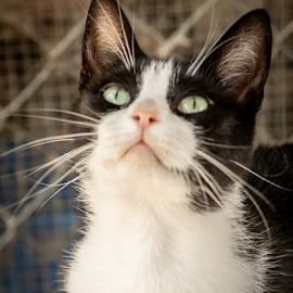 Where's my treat? by Myra Brizendine Wilson - Animals - Cats Portraits ( darlington animal shelter )