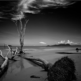 One Still Standing by Stuart Rango - Landscapes Beaches ( stuart, kuching, trees, rango, sarawak,  )