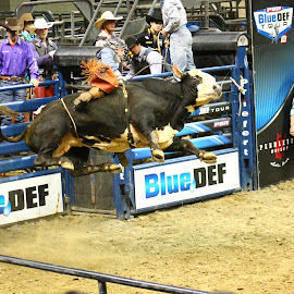 Airtime  by Brian  Shoemaker  - Sports & Fitness Rodeo/Bull Riding ( cowboy, rider, bullrider, rodeo, bull )