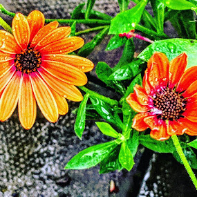 Patio 6 by Stephen Lang - Flowers Flower Gardens (  )