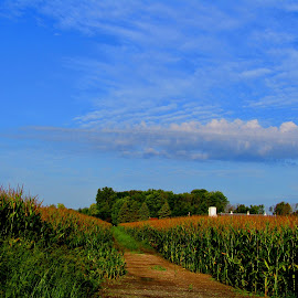 Before The Harvest by Howard Sharper - Landscapes Prairies, Meadows & Fields ( landscapes, landscape photography, agricultural, corn, fields,  )